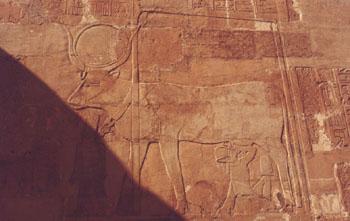Thutmose III mamando de la vaca Hathor <br> Fotografía del autor