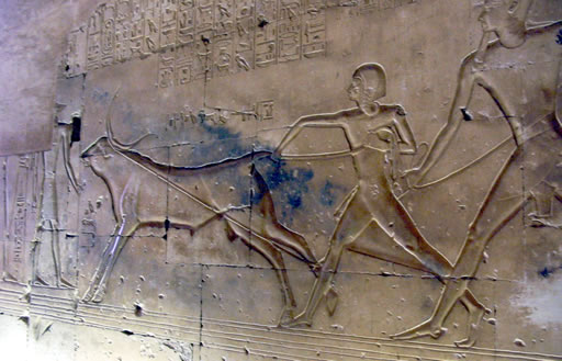 Ramsés II y el joven príncipe Amonherjepeshef enlazan un toro Fotografía: Francisco López