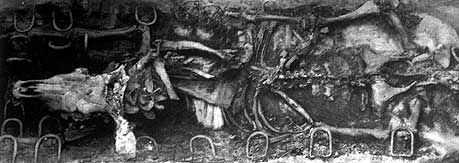 Esqueleto de un Bujis. Armant